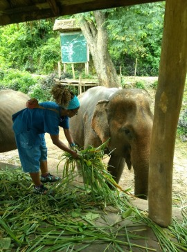 Elephant Sanctuary - Laos